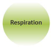 Sophrologie-Respiration