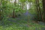 Sophro Nature Bois de Clamart 1