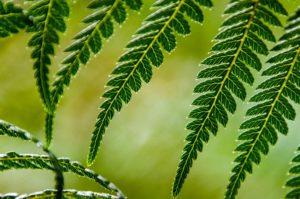 Résilience : la fougère et le bambou