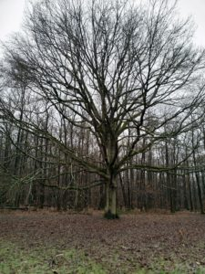 Sophro nature au pied d'un chêne Hélène Coutand