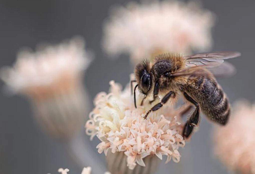Technique respiratoire de l'abeille